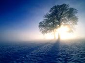 Winter_inspirations_oak_trees